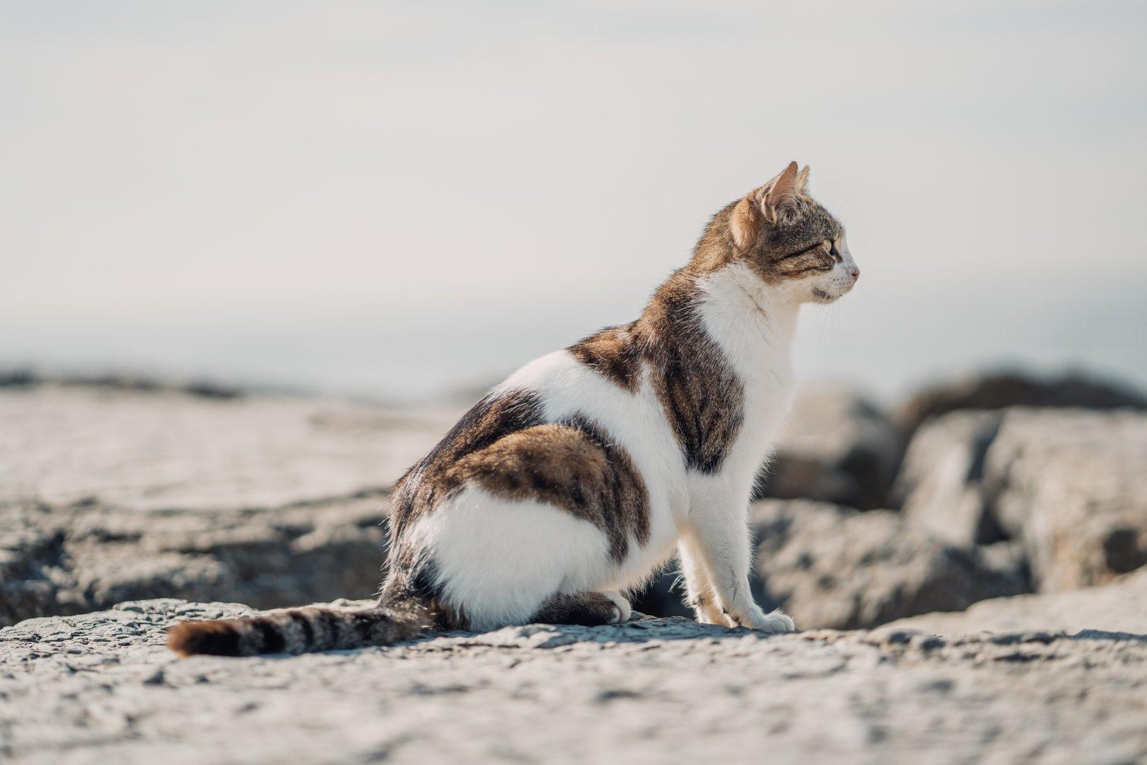 En Güzel Kedi Fotoğrafları