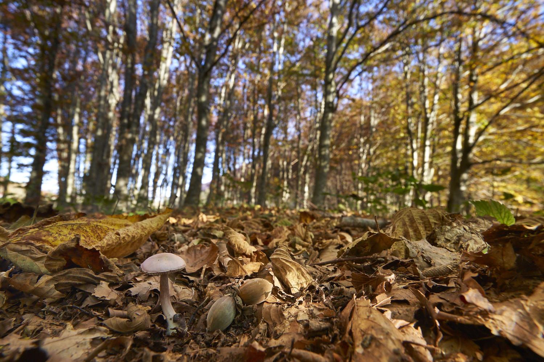 Zeiss 16-35mm f4.jpg